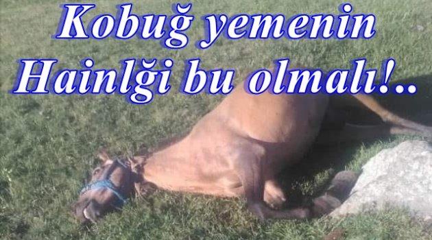 ATLARI KURŞUNLA KATLETTİLER!..