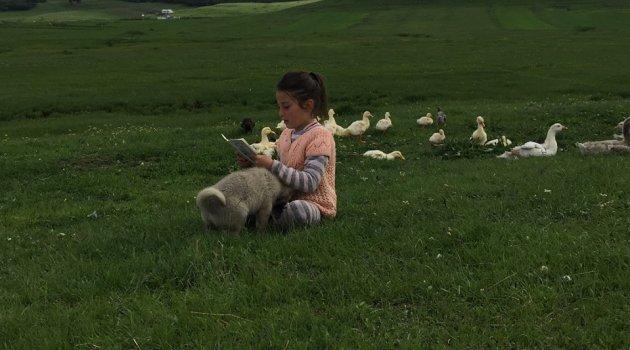 Okul Bitti, Çobanlık Başladı..