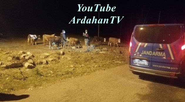POLİS ARDAHAN'DA UYARDI, JANDARMA POSOF'TA BULDU!..