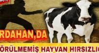 DAMAL'DA TRAKTÖR KAZASI! 1 KADIN ÖLDÜ!