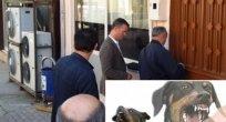 Hanak'ta Kuduz Vakası Kasap Kapattırdı!