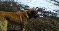 Ardahan'da 17 Nisan'da kar sürprizi!