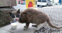 Sokak Hayvanları Sokakta Kaldı!